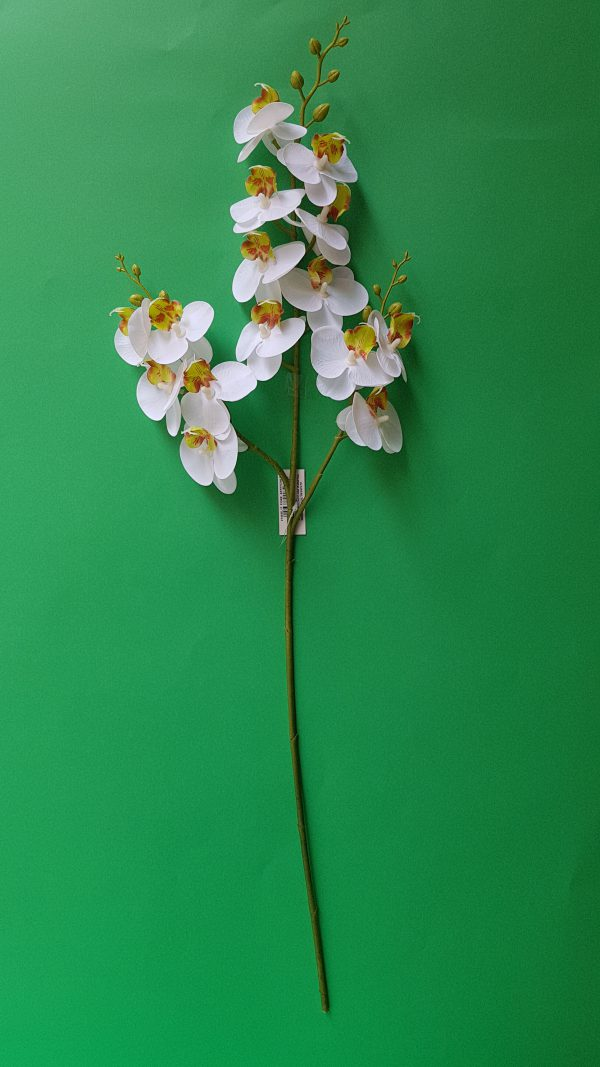 Ramo Orchidea