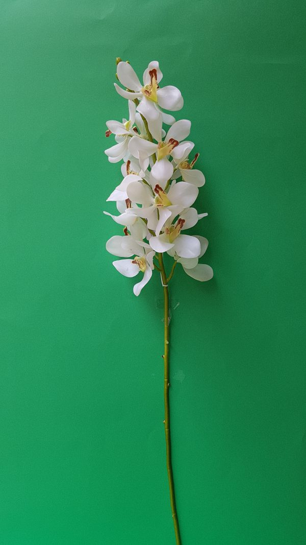 Bruco Ramo Orchidea bianca variegata