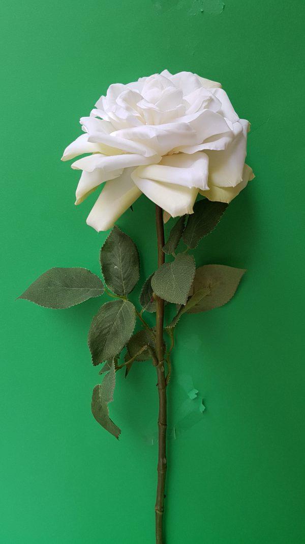Amadeus Ramo Rosa bianca