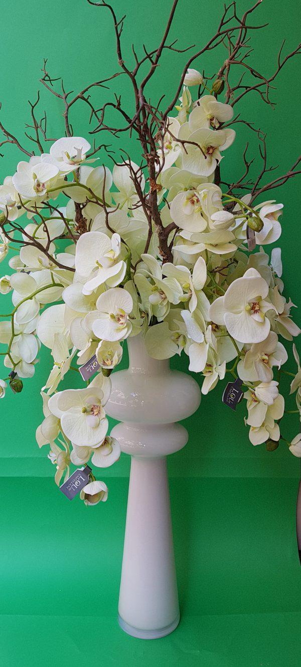 Amadeus Ramo Orchidea