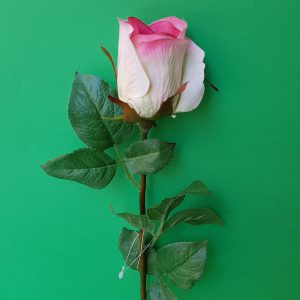 Ramo Rosa-rosa sfumata