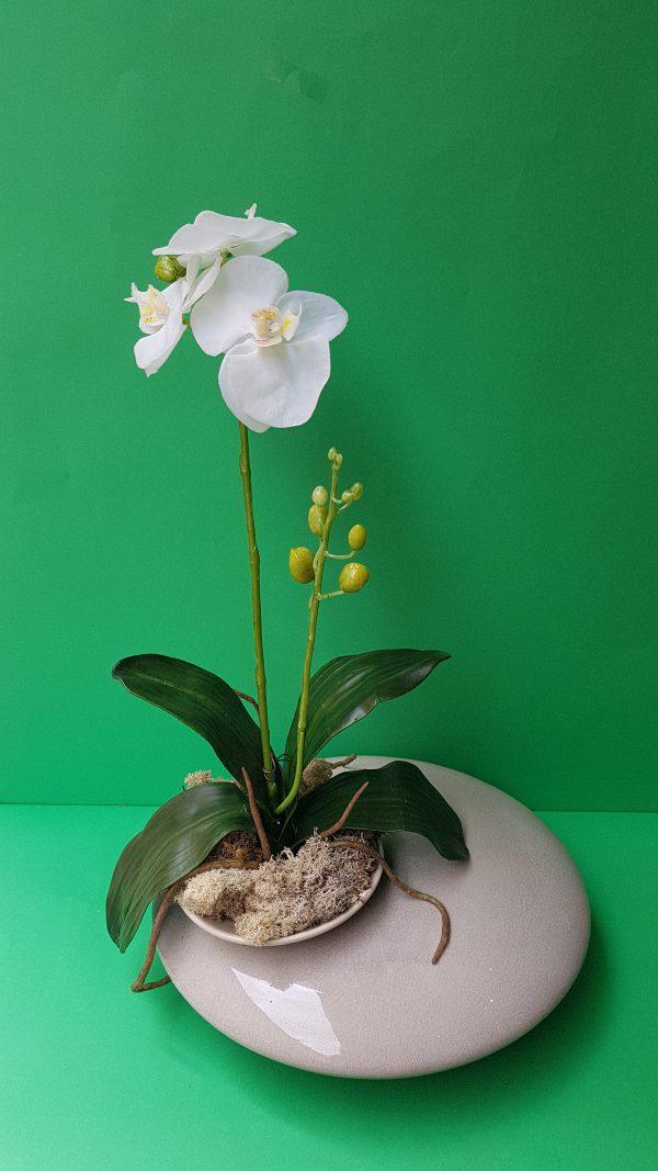 Bruco Bush Pianta Orchidea