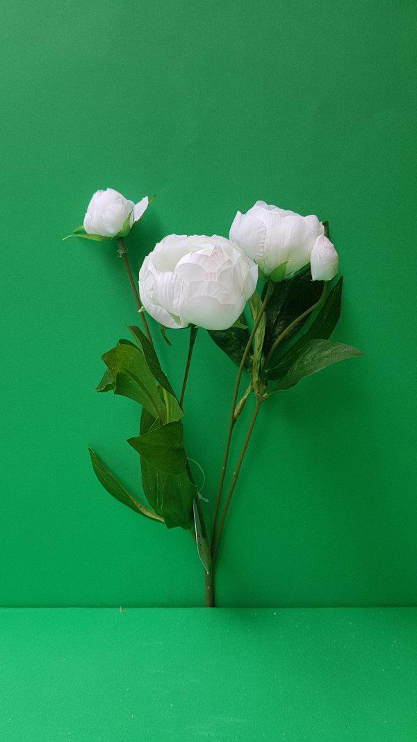 Amadeus Bush Ranuncoli bianchi