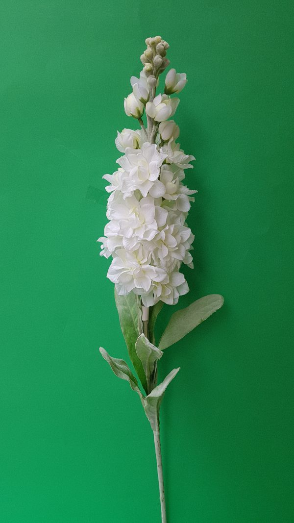 Ramo Violaciocca bianca
