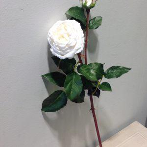 ramo rosa bianca e bocciolo