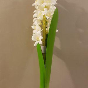 giacinto bianco con foglie