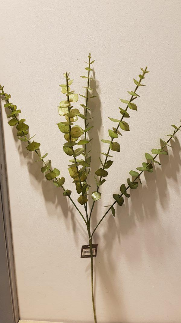 Ramo eucalipto verde marcio