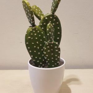 vaso con cactus