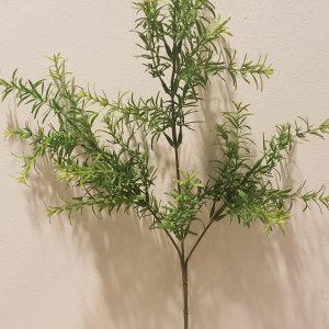 ramo asparagina