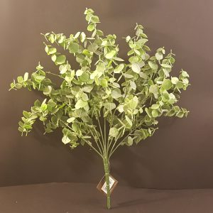 bush eucalipto