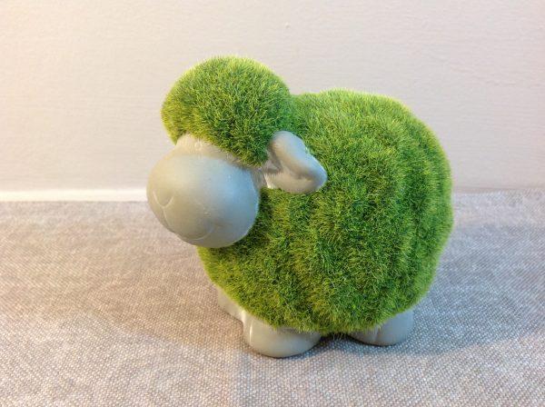 pecorella verde