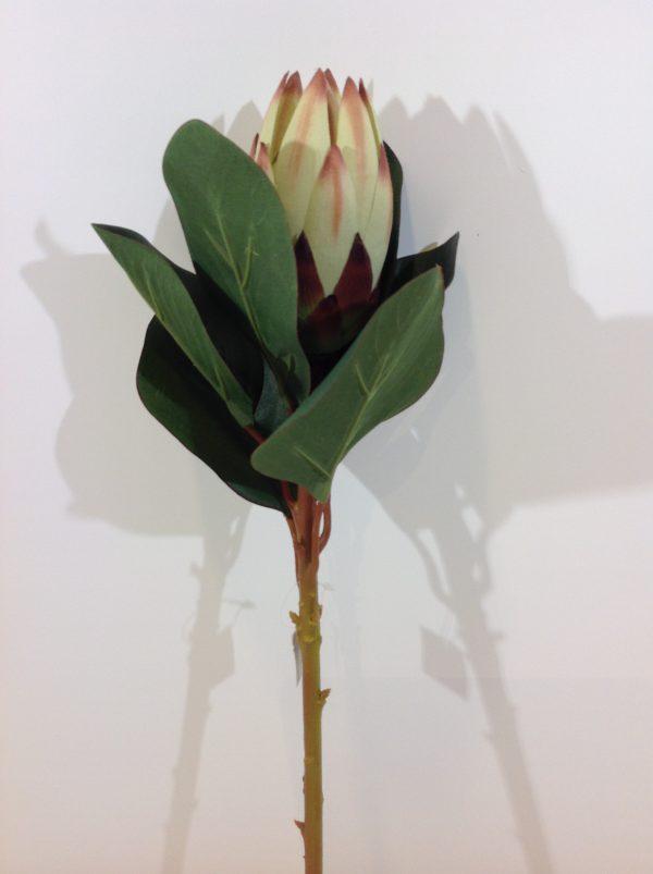 EDG (Enzo De Gasperi) Ramo di protea
