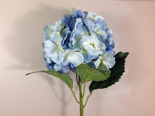 Bruco Ramo di ortensia azzurra sfumata