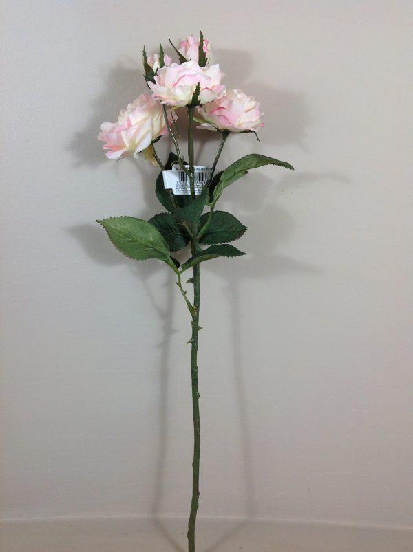 rosa binca sfumata rosa
