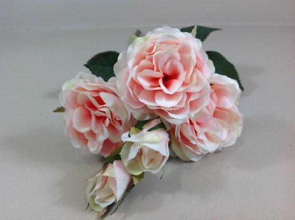 rosa rosa e bianca